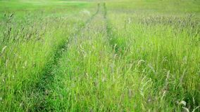 Huge grass stock video footage
