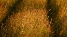 Huge grass stock footage