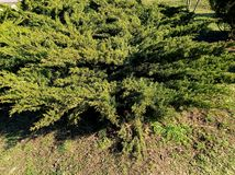 Huge green bush at sunny day in park. Huge green bush sunny day park stock photos