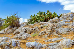 Huge green cactus. Rethymno, Crete, Greece. Giant green cactus growing among huge boulders on hills inside of courtyard Fortezza Castle - Venetian fortress with Stock Photos