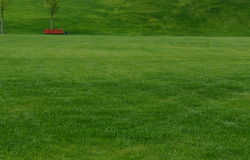 A huge green lawn. In the city park Royalty Free Stock Photography