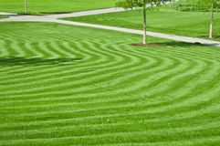 Huge green lawn Royalty Free Stock Photography