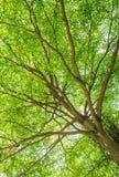 Huge green tree Stock Photo