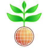 Huge growth. Huge plant growth Stock Image