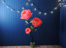 Huge growth pink flowers in the interior on the background of blue wall with retro garland Royalty Free Stock Photo