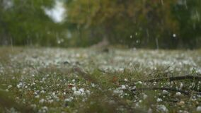 Huge hail, ice snow drops fall from the sky, in the forest.