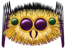 Huge hairy spider Royalty Free Stock Image