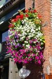 Huge hanging flower baskets Stock Images