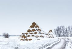 Huge haystacks in rolls lie in the field Stock Image