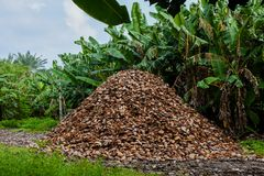 Huge heap of coconuts peels. On the meadow near tropical forest at Maldives Royalty Free Stock Photo