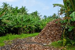 Huge heap of old brown coconuts peels. Huge heap of old coconuts peels on the meadow near tropical forest at Maldives Stock Photos