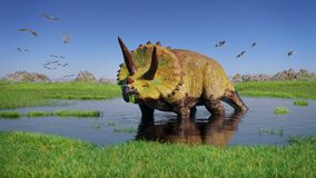 Triceratops horridus dinosaur and a flock of Pterosaurs from the Jurassic era eating water plants in beautiful landscape. Huge herbivore dinosaur in beautiful Royalty Free Stock Photo