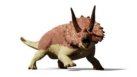 Triceratops horridus dinosaur 3d render isolated with shadow on white background. Huge herbivore dinosaur from the Jurassic era Stock Photos