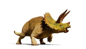 Triceratops horridus dinosaur 3d render isolated with shadow on white background. Huge herbivore dinosaur in natural colours Royalty Free Stock Photography
