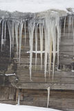 Huge icicles hang from the roof of the old house. On the roof of the old house hanging huge sharp icicles. Wall House made of wooden planks, a little wet. Walk royalty free stock photography