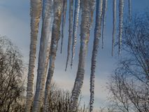 Huge icicles of ice hang from the roof against the blue sky and the treetops. royalty free stock photography