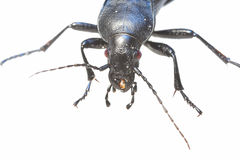 Huge insect Stock Photography