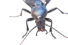 Huge insect - macro photo Stock Photo