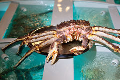 Huge king crab on the tray Royalty Free Stock Image