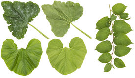 Huge leaves of garden vegetables Royalty Free Stock Photography