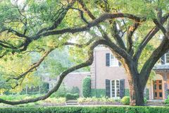 Huge live oak tree house Houston, Texas, USA. Colonial brick house with huge live oak tree and beautifully landscaped front yard driveway. Shady tree branches royalty free stock photo