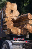 Huge logs in the end on special semi truck trailer Stock Image