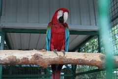 Huge macaw parrot royalty free stock photography