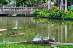 Huge monitor lizard. Near the lake outdoor stock photo