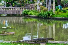 Huge monitor lizard. Near the river outdoor stock photo