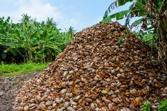 Huge mountain of coconuts peels. At the tropical island in Maldives Royalty Free Stock Image
