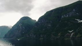 Huge mountains covered by green woods at river. Nature. Landscape. Many flying seagulls. Grey sky stock video footage