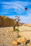 Huge multi-colored balloon. Over the hot desert. Stone desert near the seaside resort of Eilat. Bizarrely dried curved wood royalty free stock photography