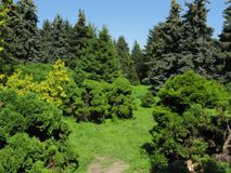 A huge number of green coniferous trees and lush bushes in the background of the park zone stock image
