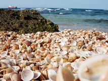 A huge number of shells Stock Image