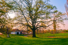 Huge oak tree in front of the farm house Royalty Free Stock Photography