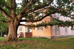 Huge oak tree near the old mansion Stock Photo