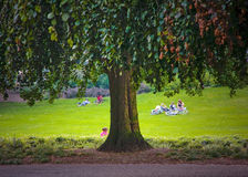 Huge old tree. In the park with resting people around Royalty Free Stock Image