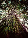 Huge old tree from below Stock Photos
