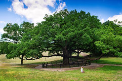 Huge old tree and tiny girl. Huge old tree against blue sky and tiny girl Royalty Free Stock Photos