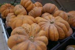 Huge orange pumpkins stock photo