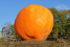 Huge Orange Pumpkin Stock Photo