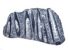 Huge orthoceras fossil sculpture in black marble. Isolated on white background Stock Photos