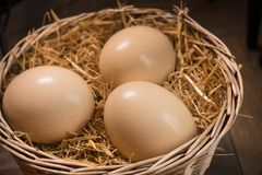 huge ostrich eggs Royalty Free Stock Image