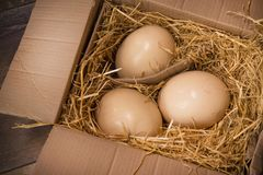 huge ostrich eggs Royalty Free Stock Photography