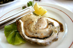 Huge Oyster Stock Images