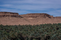 Huge palm grove in Ziz river valley, Morocco. royalty free stock photography