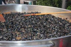 Huge pan with mussels Royalty Free Stock Photo