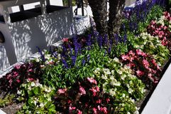 Huge park flowerpot. With beautiful blooming colorful plants stock photo