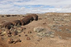 Huge petrified tree trunks sectioned in chunks and smaller pieces on hill. At the southern part of Petrified Forest National Park in winter, northeastern stock photos