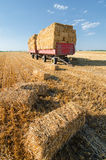 Huge pile of hay on trailer standing on agricultural field Stock Photography